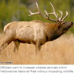 Picture of elk accompanying news story about wireless service in Yellowstone.